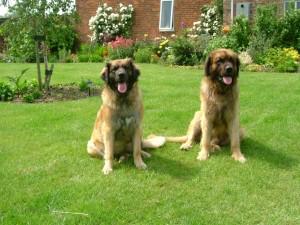 Keira and Logan